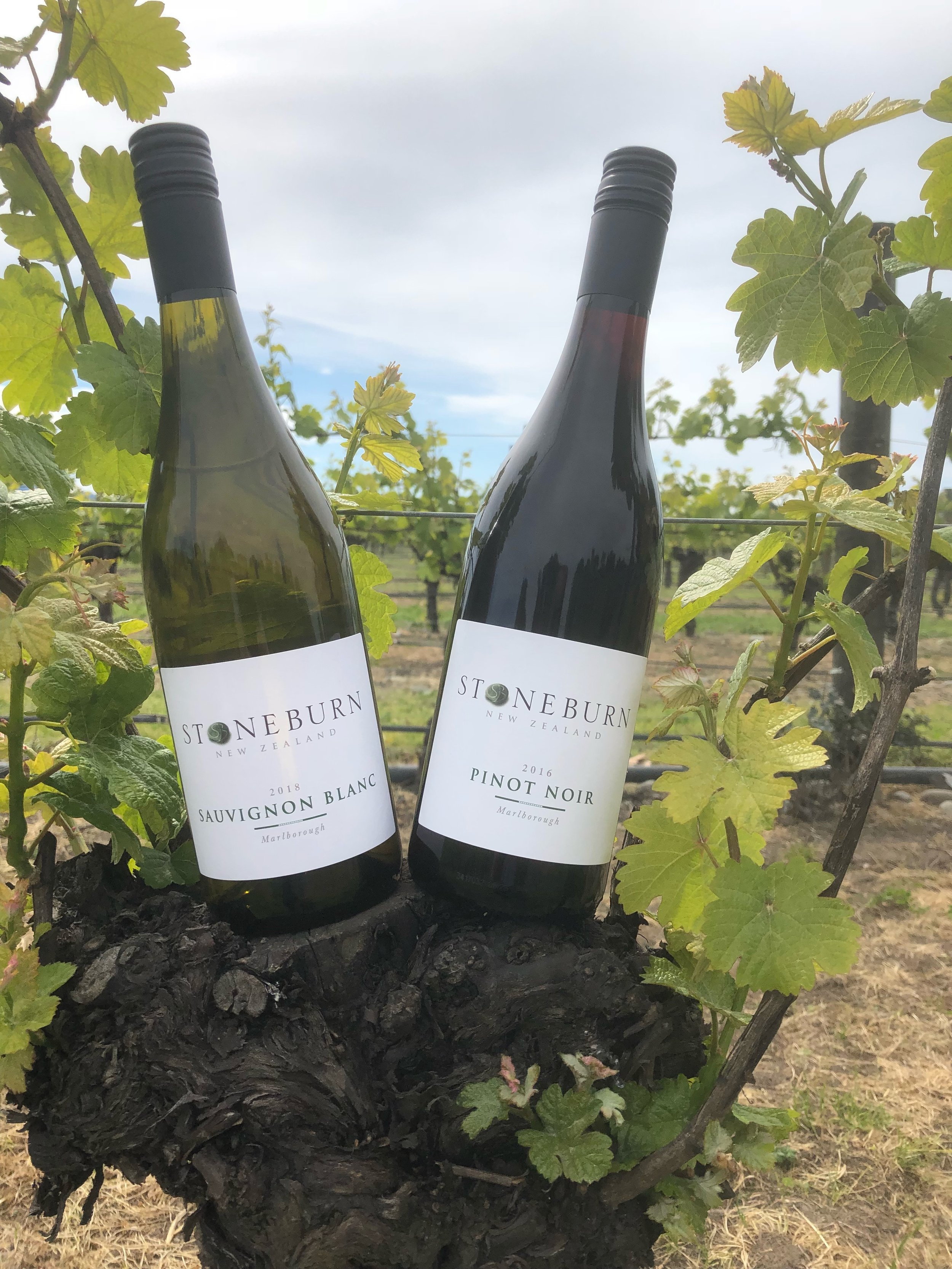 Stoneburn Vines.jpg