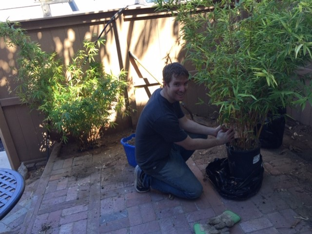 Elijah planted beautiful bamboo plants in our backyard for me.