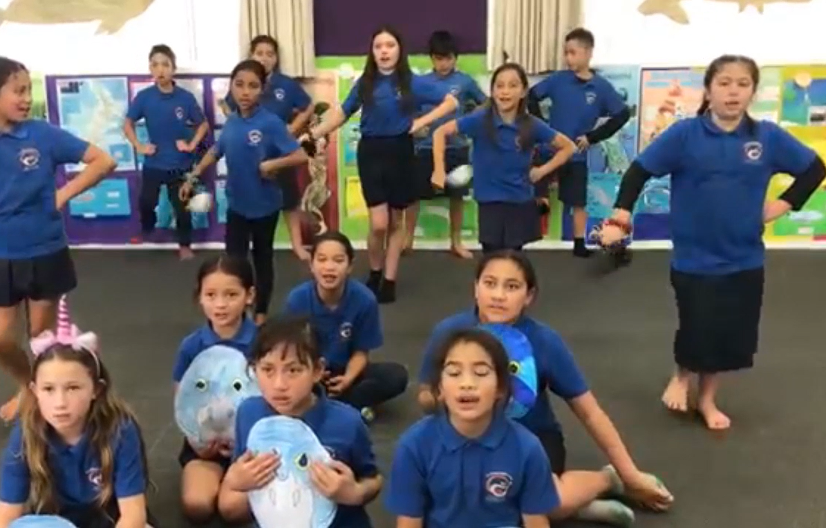 Years 5-8 - 60 minute lesson-plan focus: What is kaitiakitanga? What local kaitiaki already exist in our rohe?Extra resources: To be announced.Call to action: To be announced.