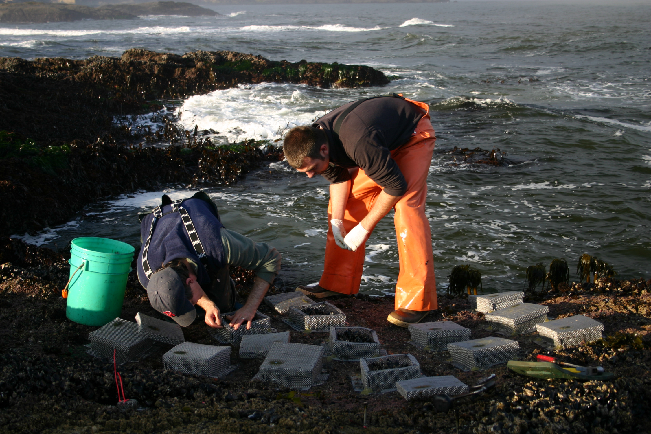 Research - We integrate ecology, evolution, and biogeography to understand the processes that shape marine communities over large spatial scales and in an era of accelerating global change.