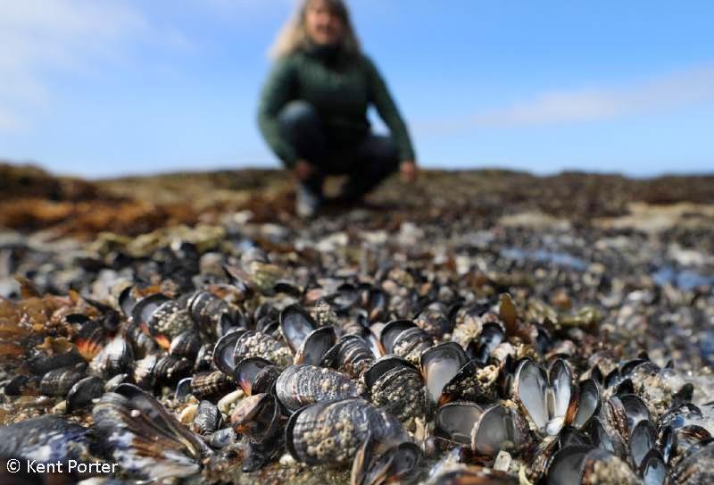 mussel_mortality.jpg
