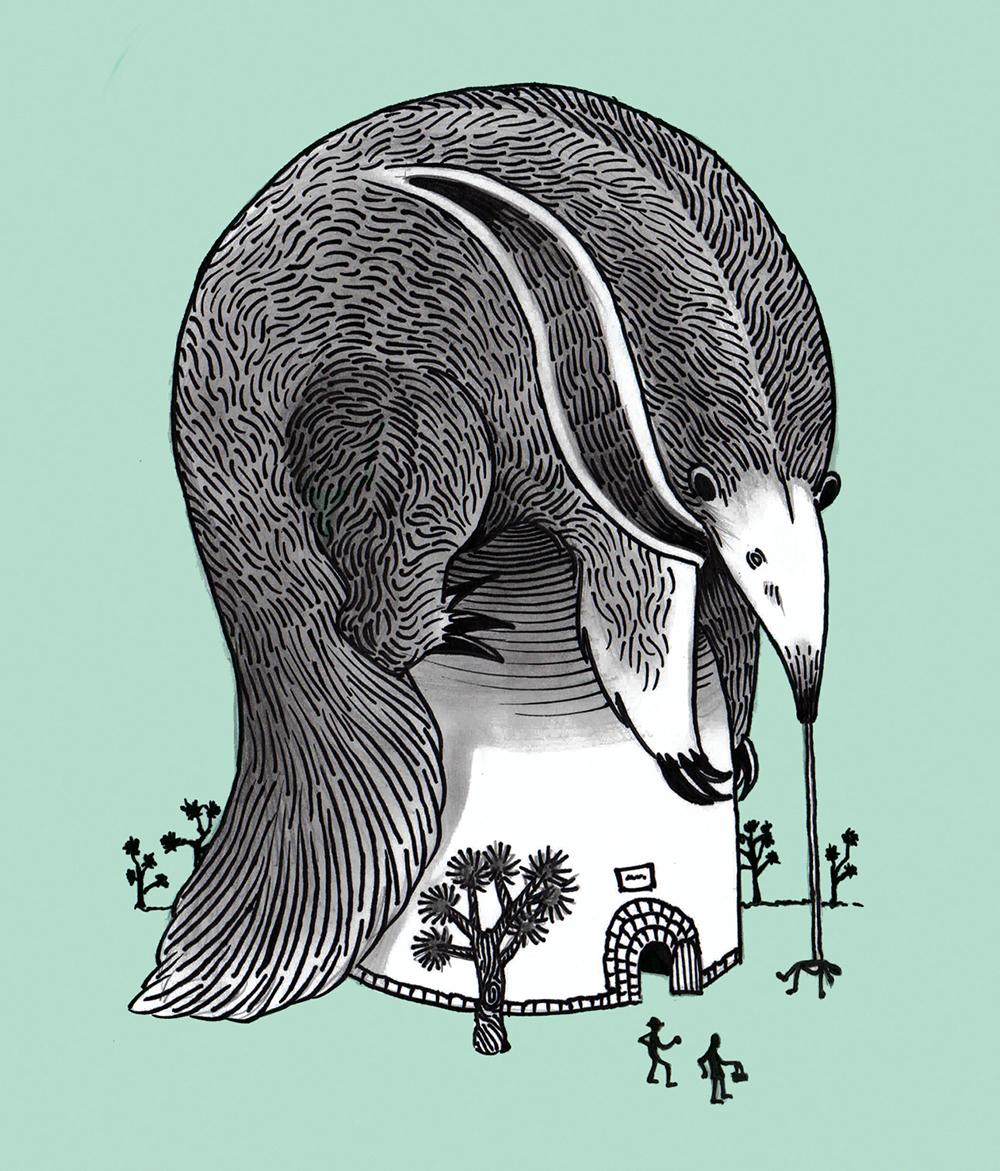 anteater-1.jpg