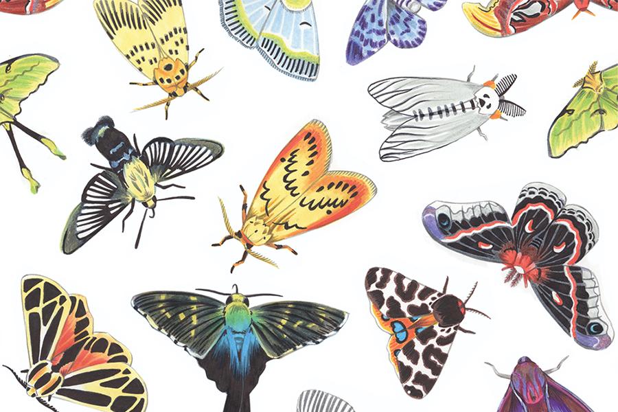 00-moths-thumbnail.png