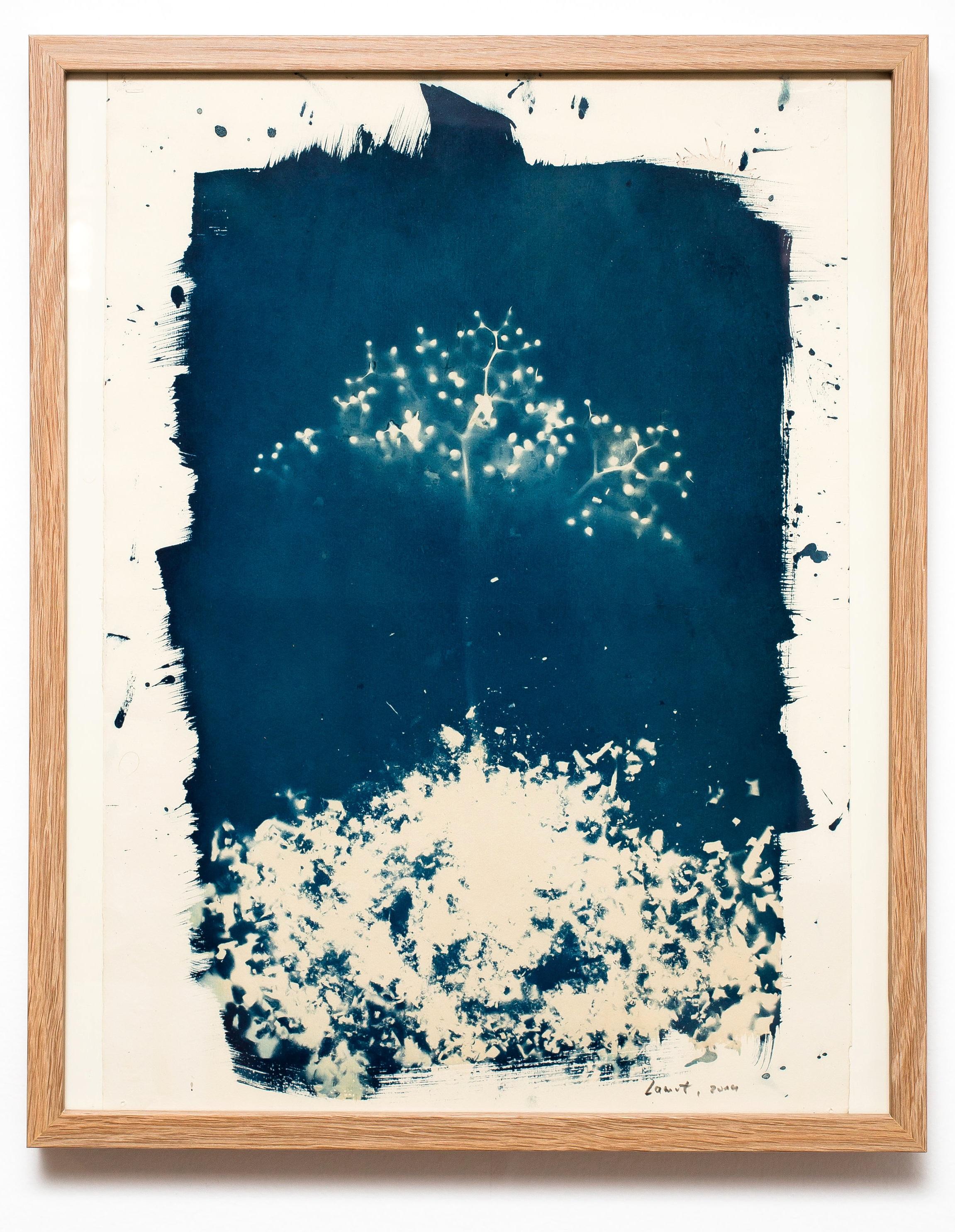 """Tree"" | Cyanotype | 40 x 30 cm | 1/1 | 2014"