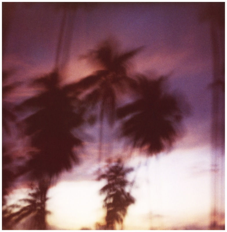 Moving Palm Trees, 2009