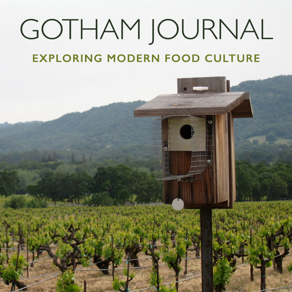 Observations in the Vineyard   January 30, 2019