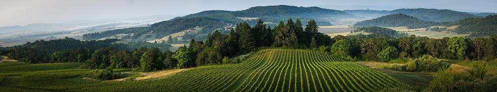 Willamette-Vineyard-2-SMALL.jpg