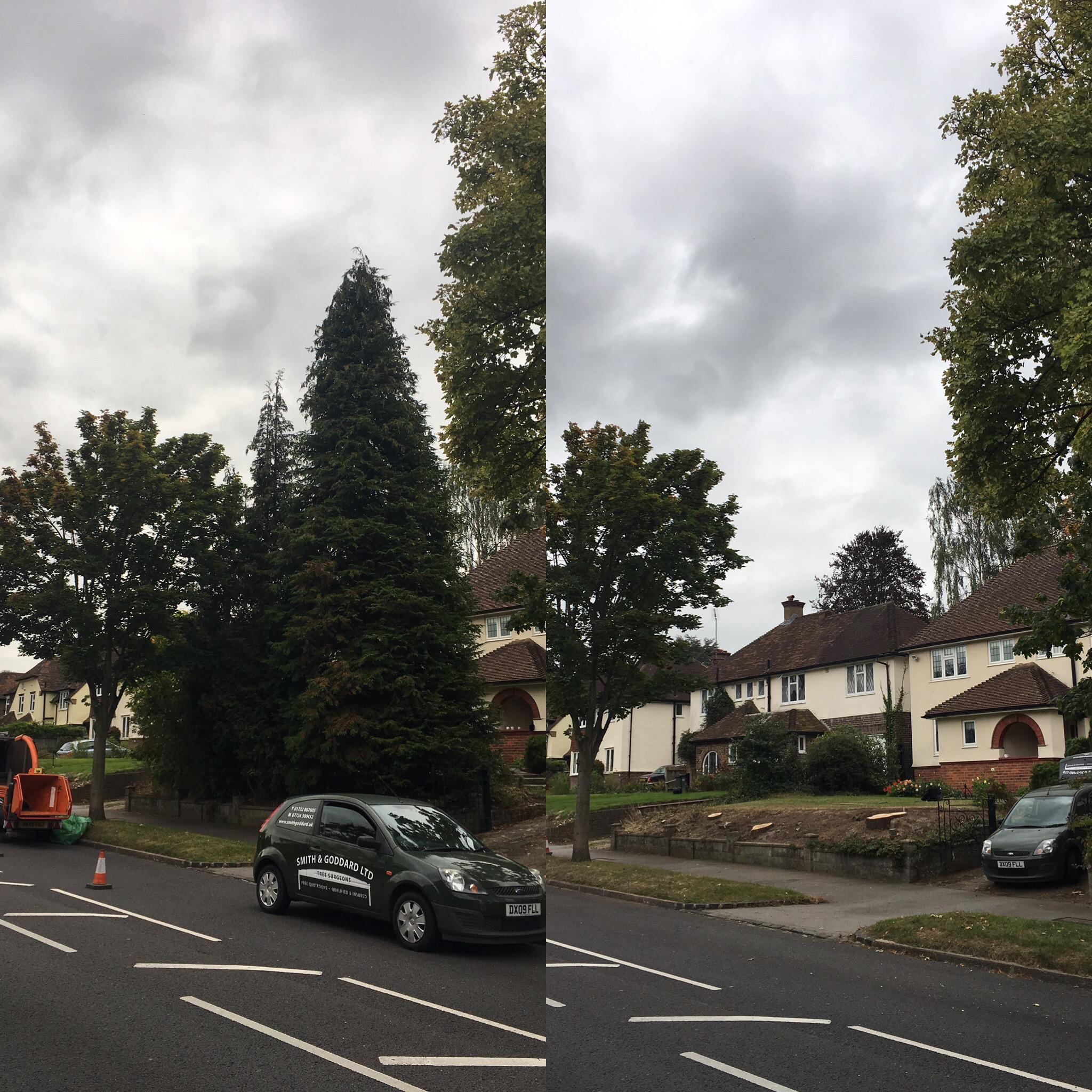 tree-dismantel-felling4.jpg