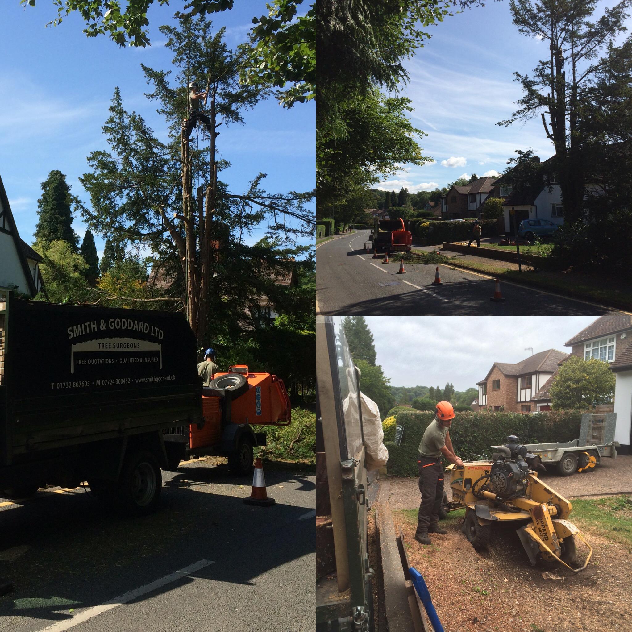 tree-dismantel-felling15.jpg