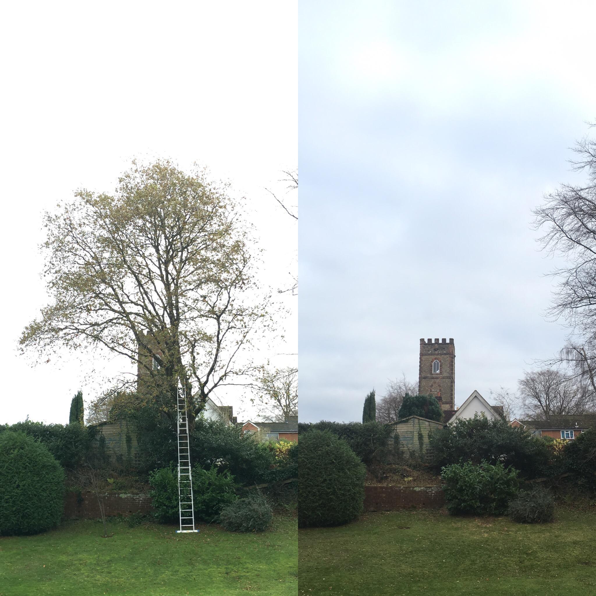 tree-dismantel-felling6.jpg