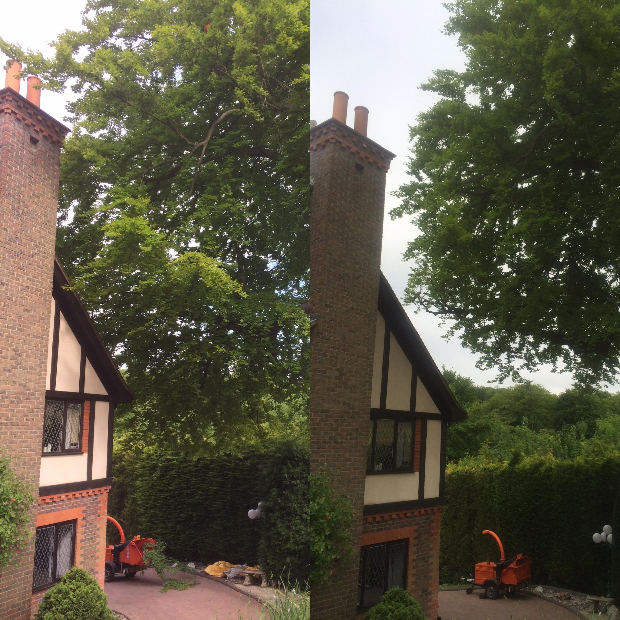 remedial-tree-pruning3.jpg