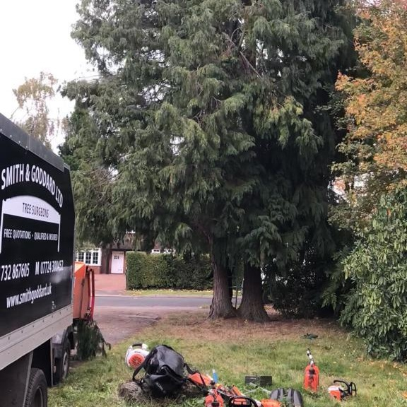 Dismantling a roadside conifer -