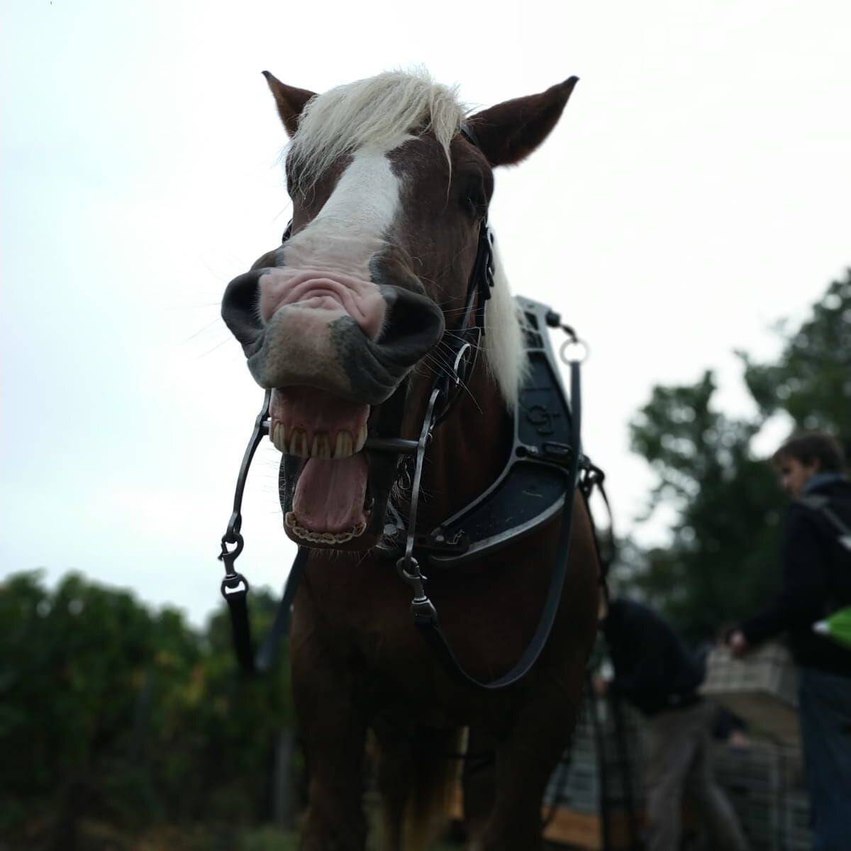And here the horse laughing at me
