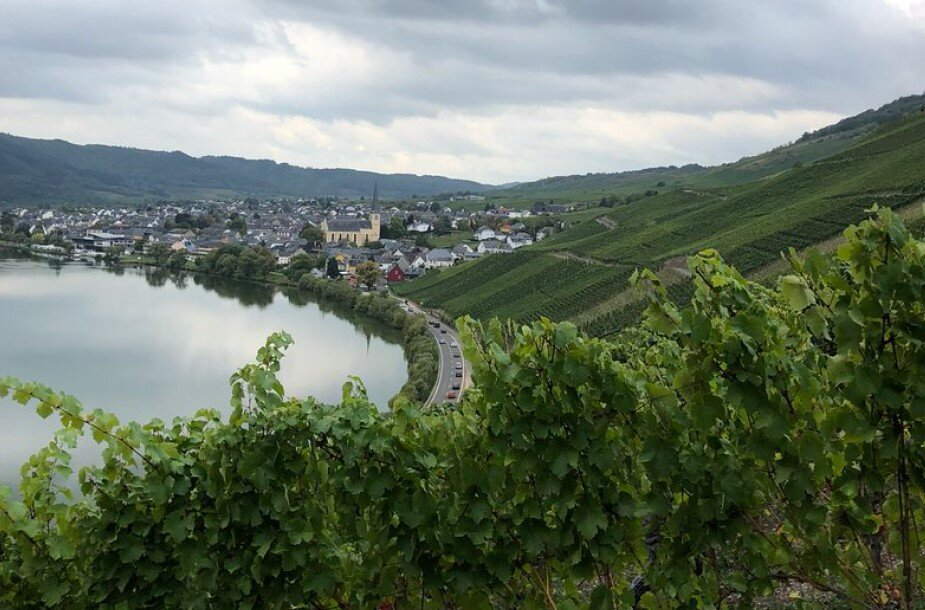 Can you guess where this Riesling vineyard is located? Our latest IBO, the Riesling Beerenauslese Kröv Steffensberg 2007, comes from here!
