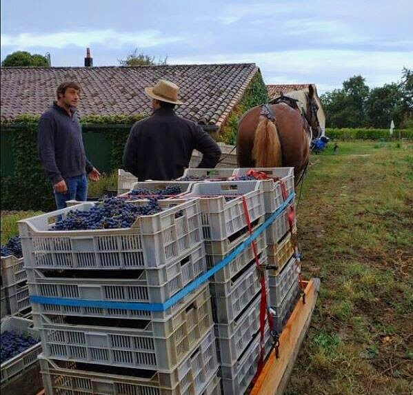 Founding member Paulo Pinto has shared with us some pictures of the team's efforts in the development of Alti Wine Exchange. Here, a chat with Adrien de Beaulieu from Chateau Coutet