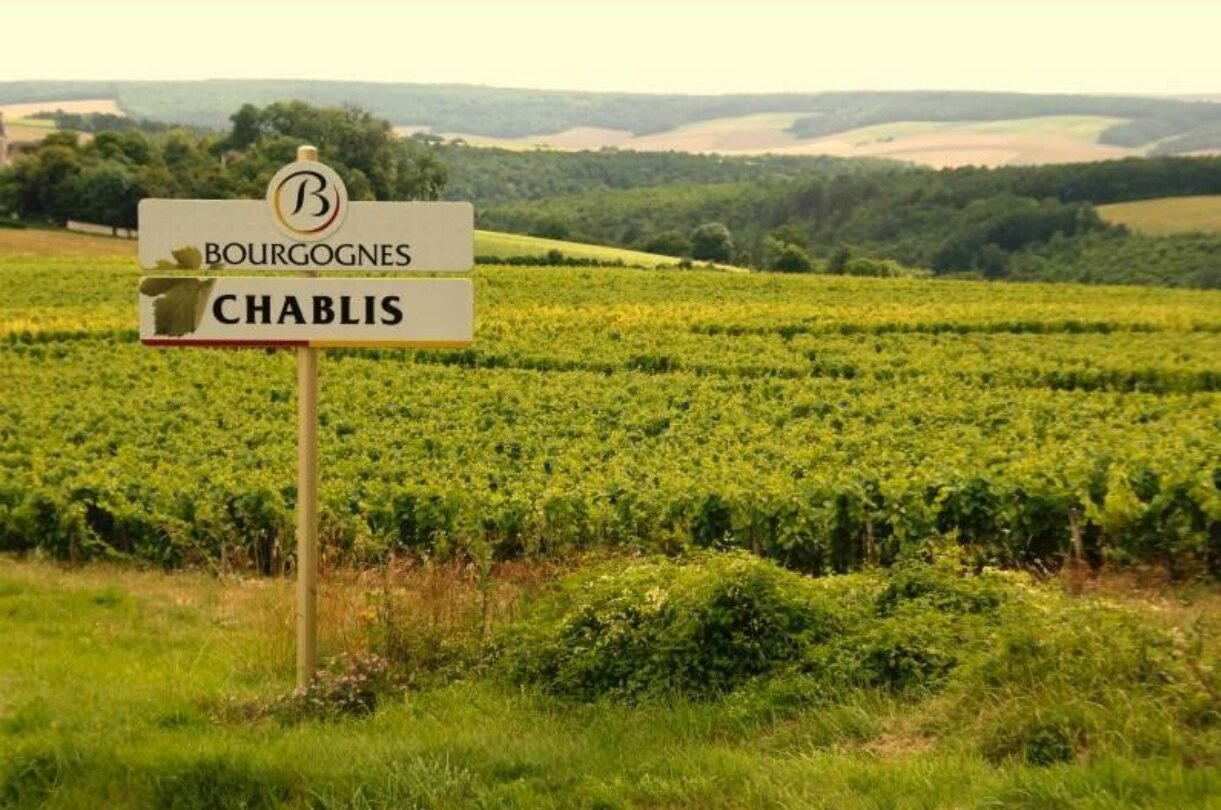 The fine Chardonnay wines from Burgundy: an overview of Chablis, Puligny, Chassagne-Montrachet, and Meursault