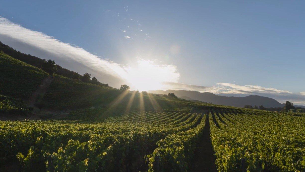 Montes vineyards in Apalta, Chile