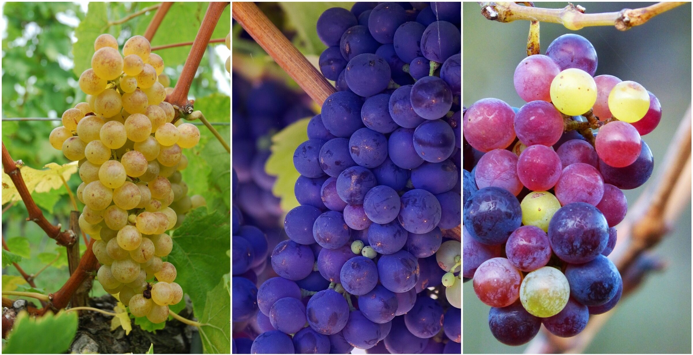 If you like this wine, try that one! Alternative varieties to explore
