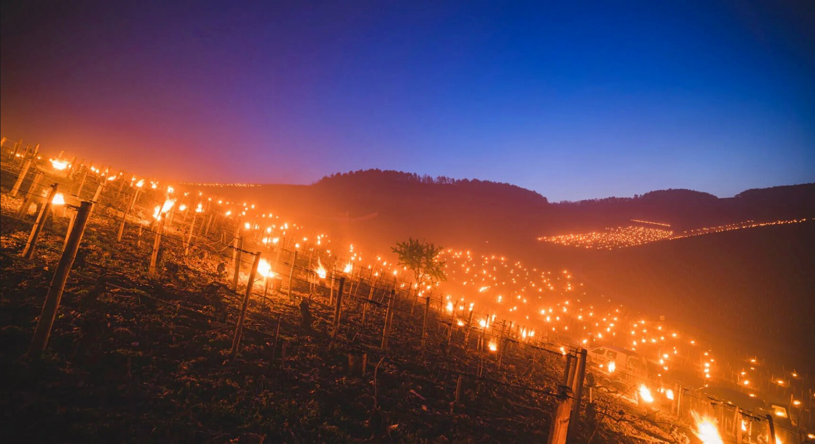 What's ahead for French 2021 vintages after the frosts?