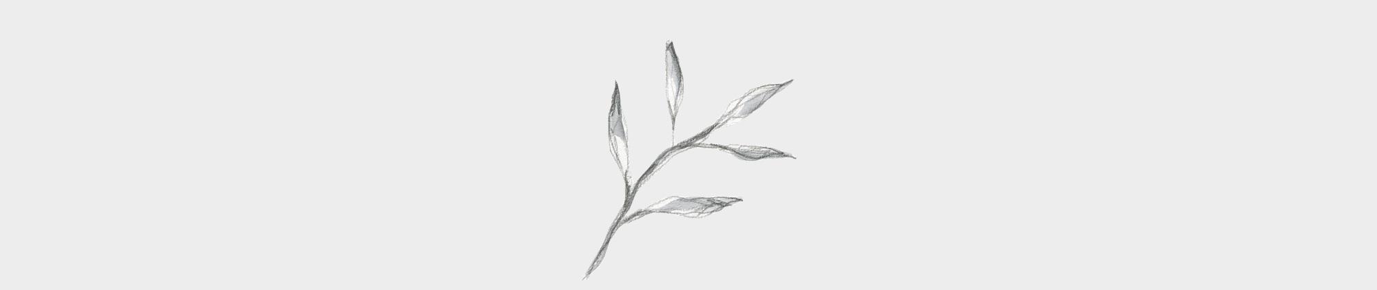 leaf-graphic.jpg