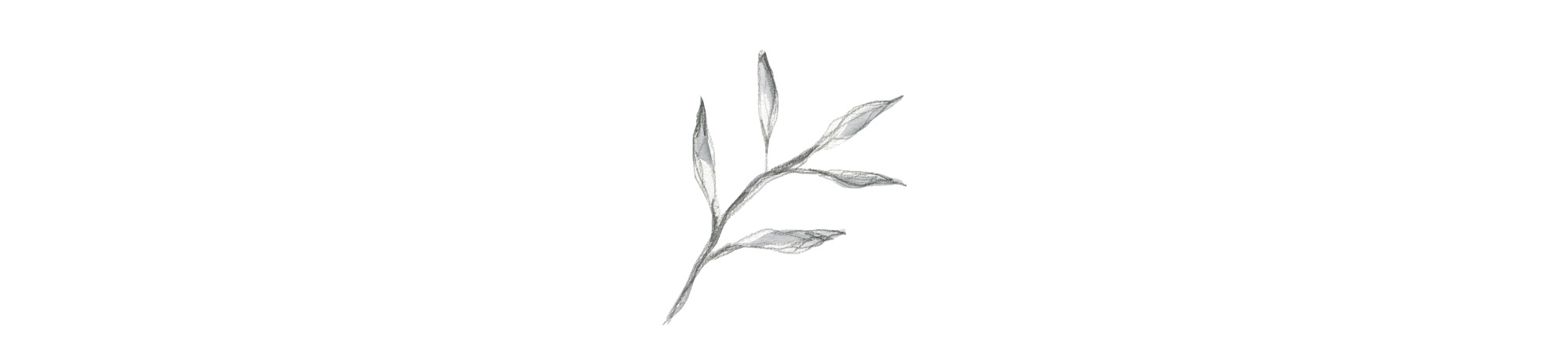 leaf-illustration.jpg