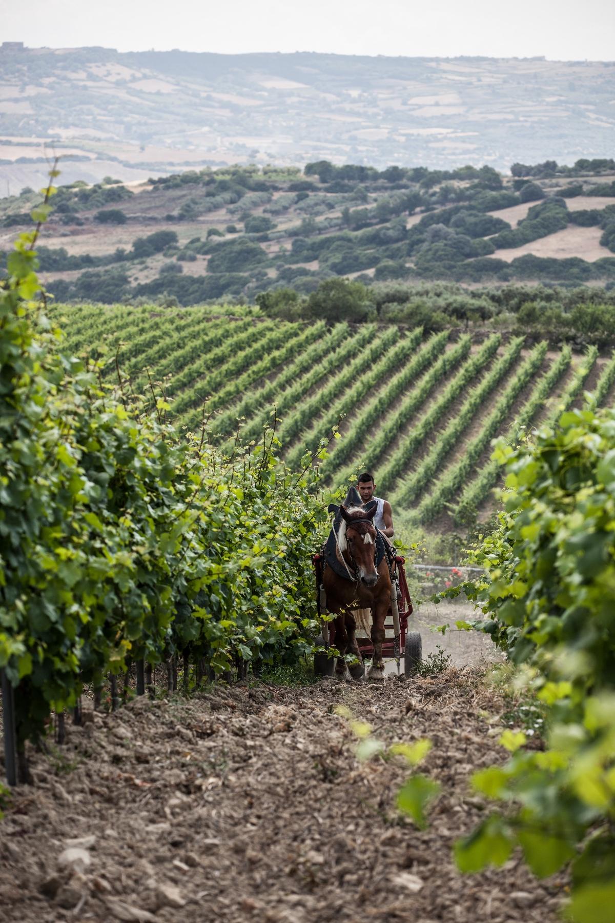 Olianas - Bio Integrated Vineyard