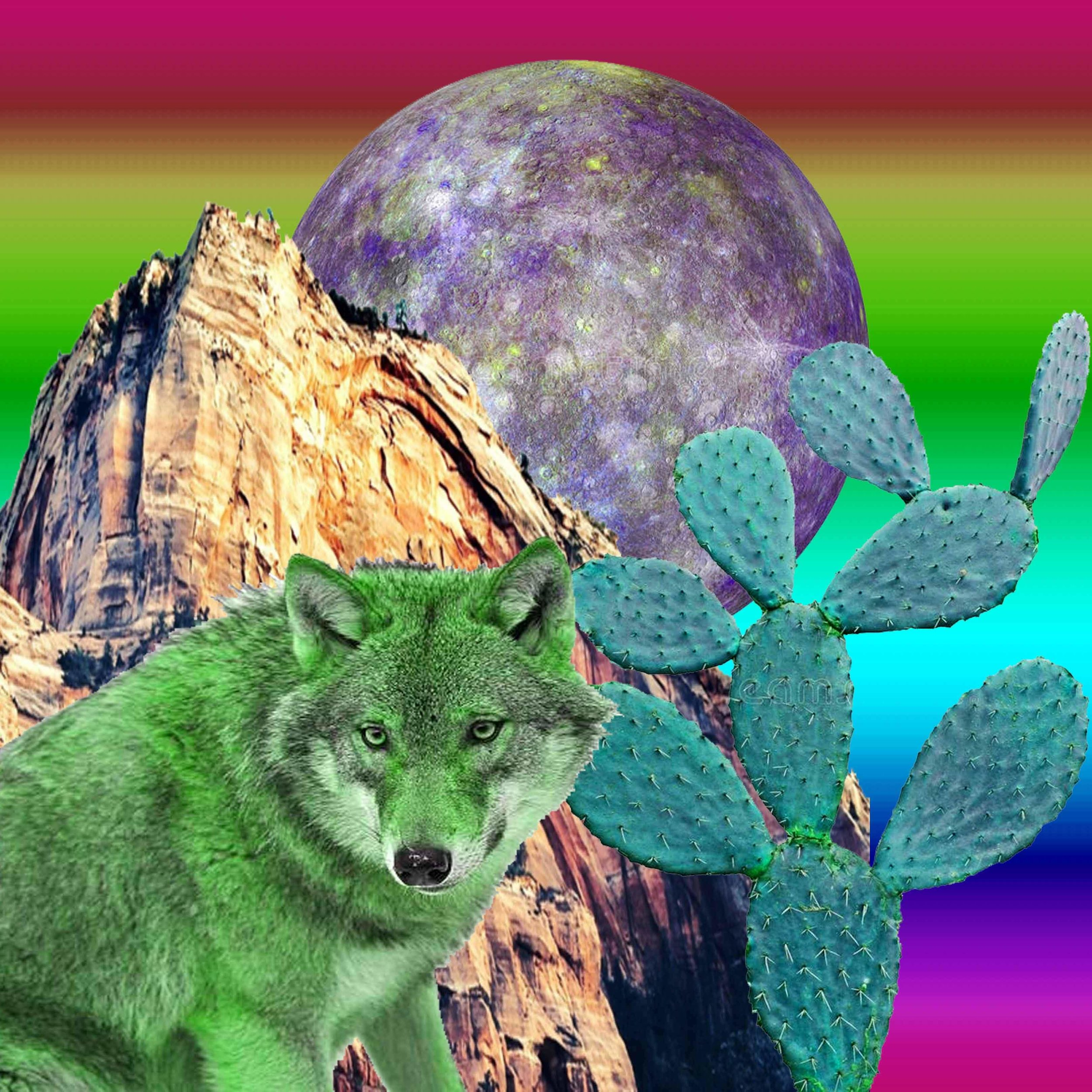 coyotemagic.jpg