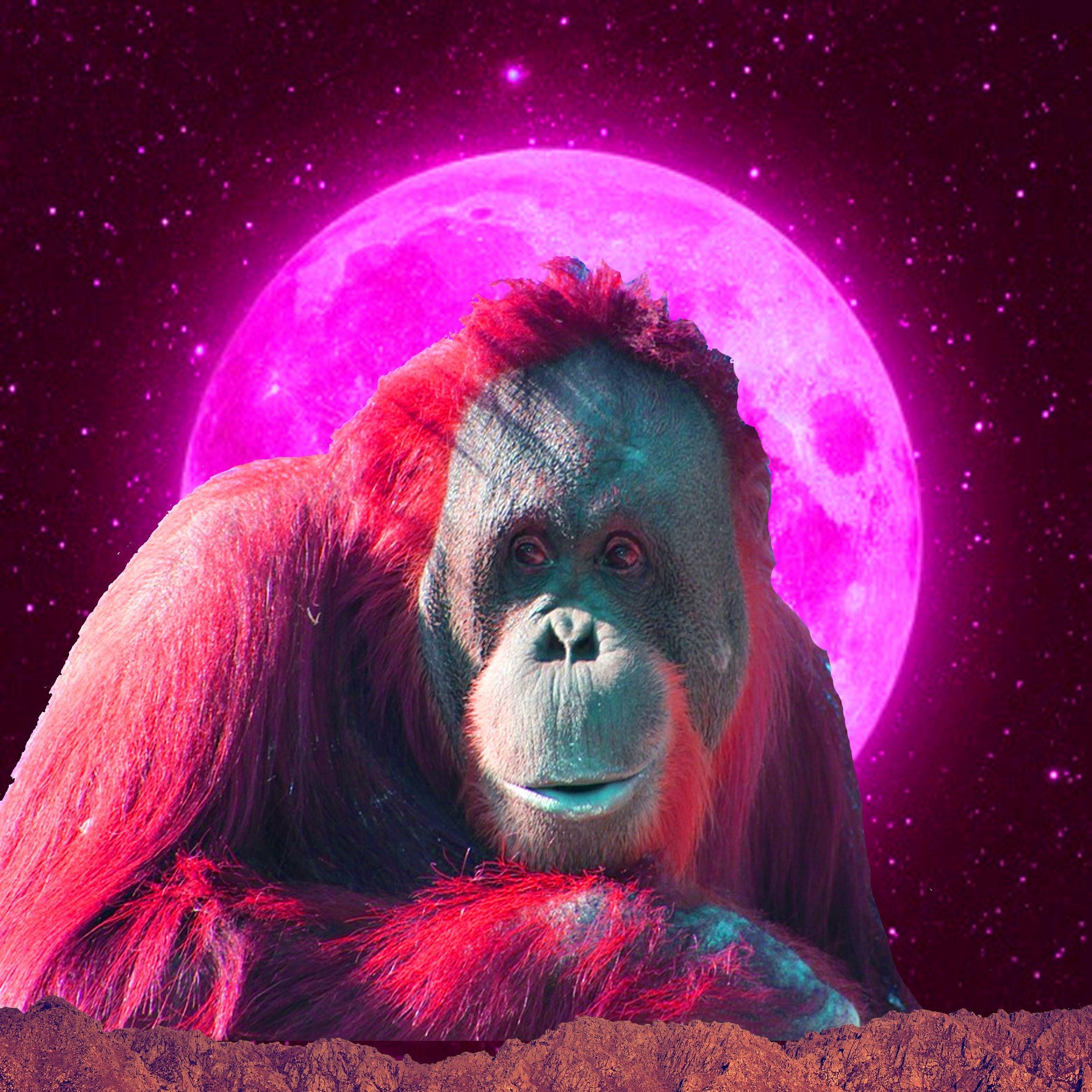 orangutangoddess.jpg