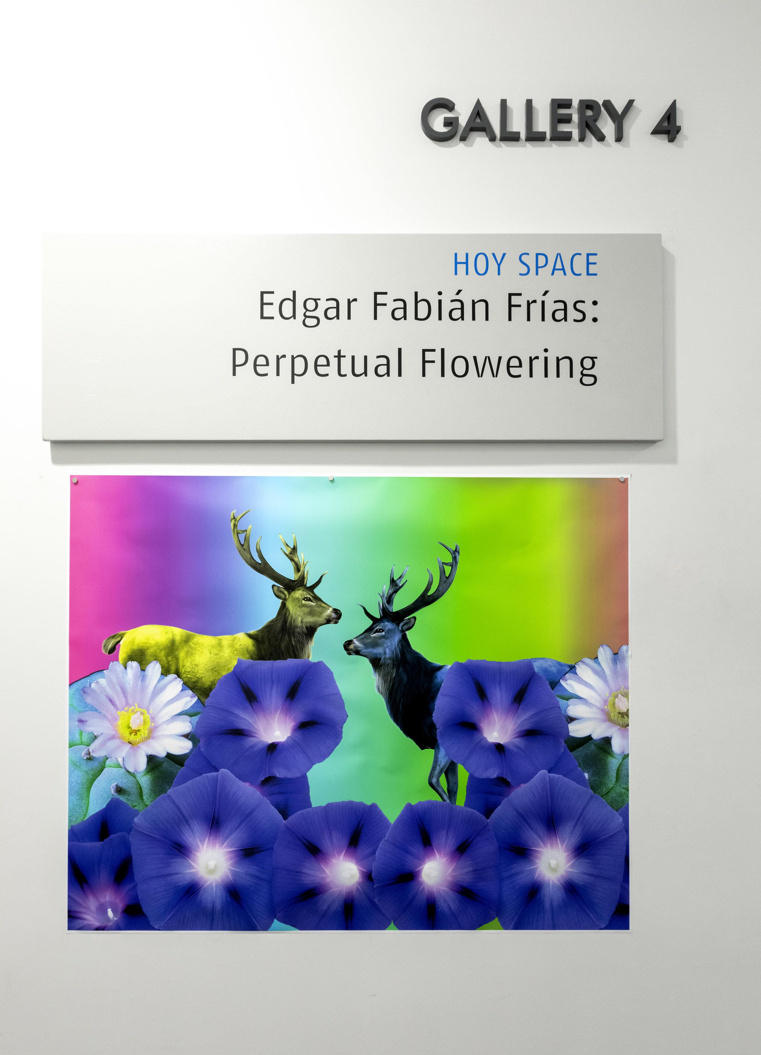 5-14-2019_EdgarFabianF_ArtInstall_01.jpg