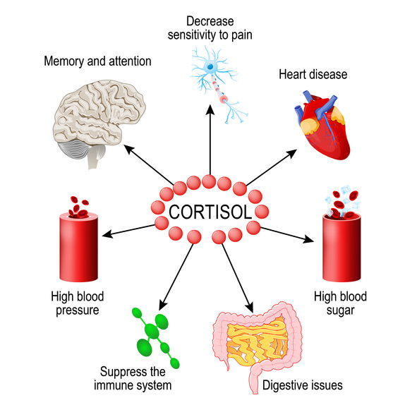 Cortisol affects your body in many different ways.