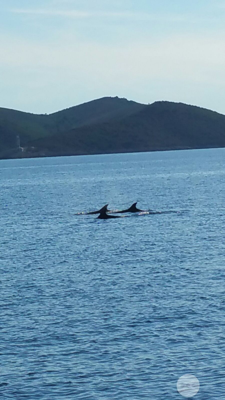 Croatian dolphins