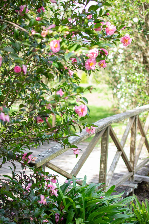 Garden of Light Tour, Tyalgum, Pink Flowers