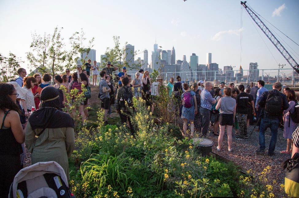 Swale at Brooklyn Bridge Park , 2017  photo courtesy of Kate Kiefert