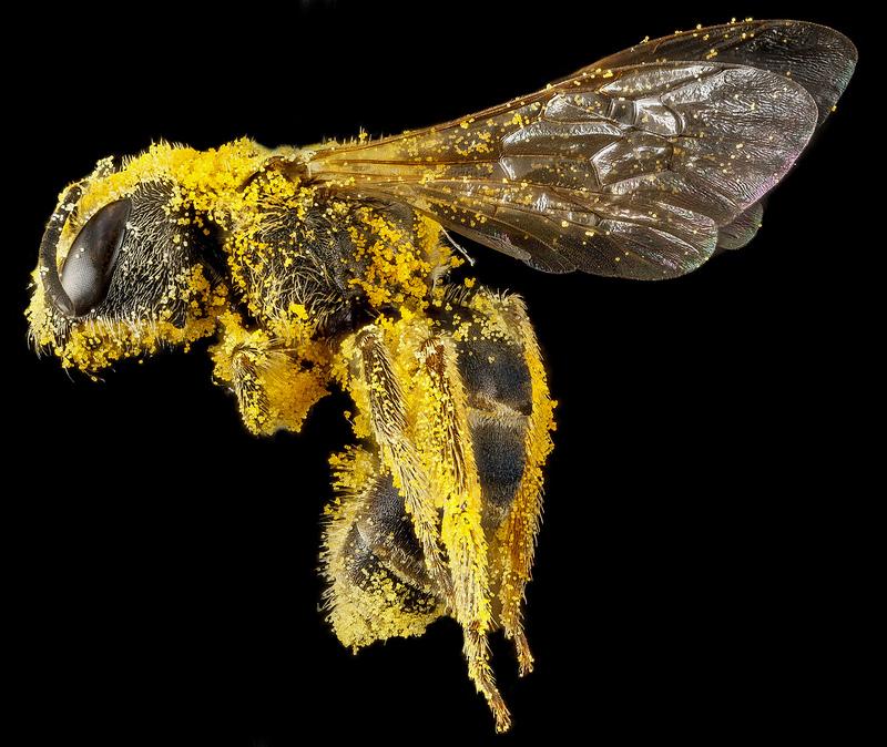 Sam Droedge,  Biologist, Photographer, Bee Build Workshop