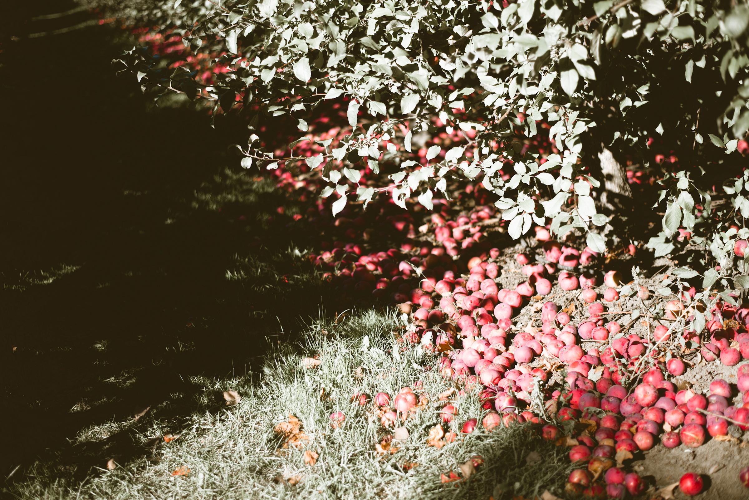 Fall Mini Sessions - xx