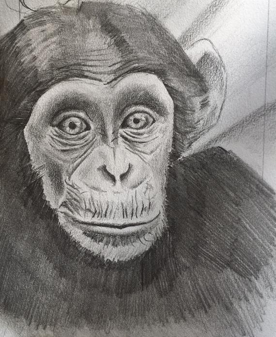 kyle's chimpanzee .png