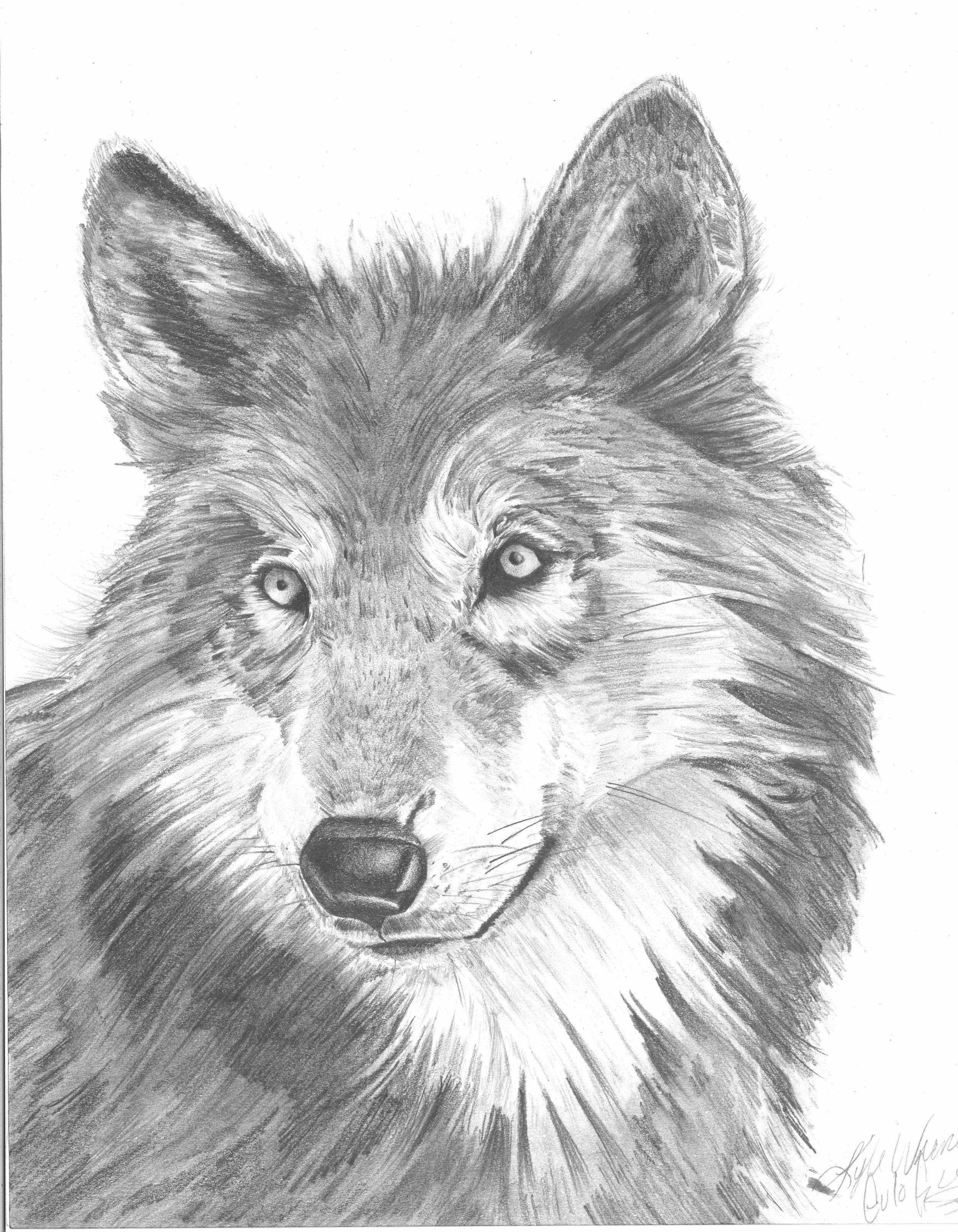 kyle wolf.jpg