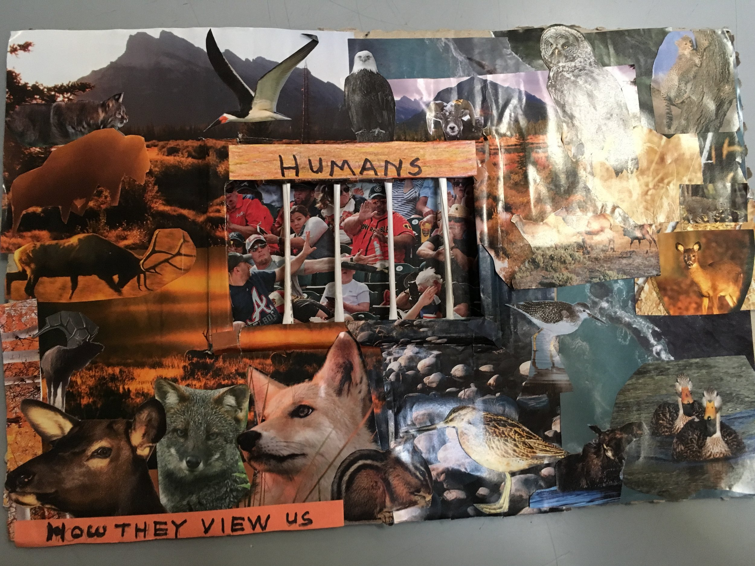 The Human Zoo, Collage