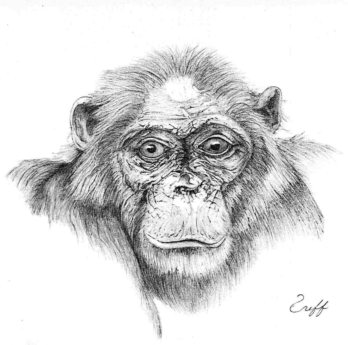 Fifi, by Jeff. This drawing won an award at an art festival to which Marc submitted it. All signed artwork and prose using first and last names are posted with the permission of the artist or writer.
