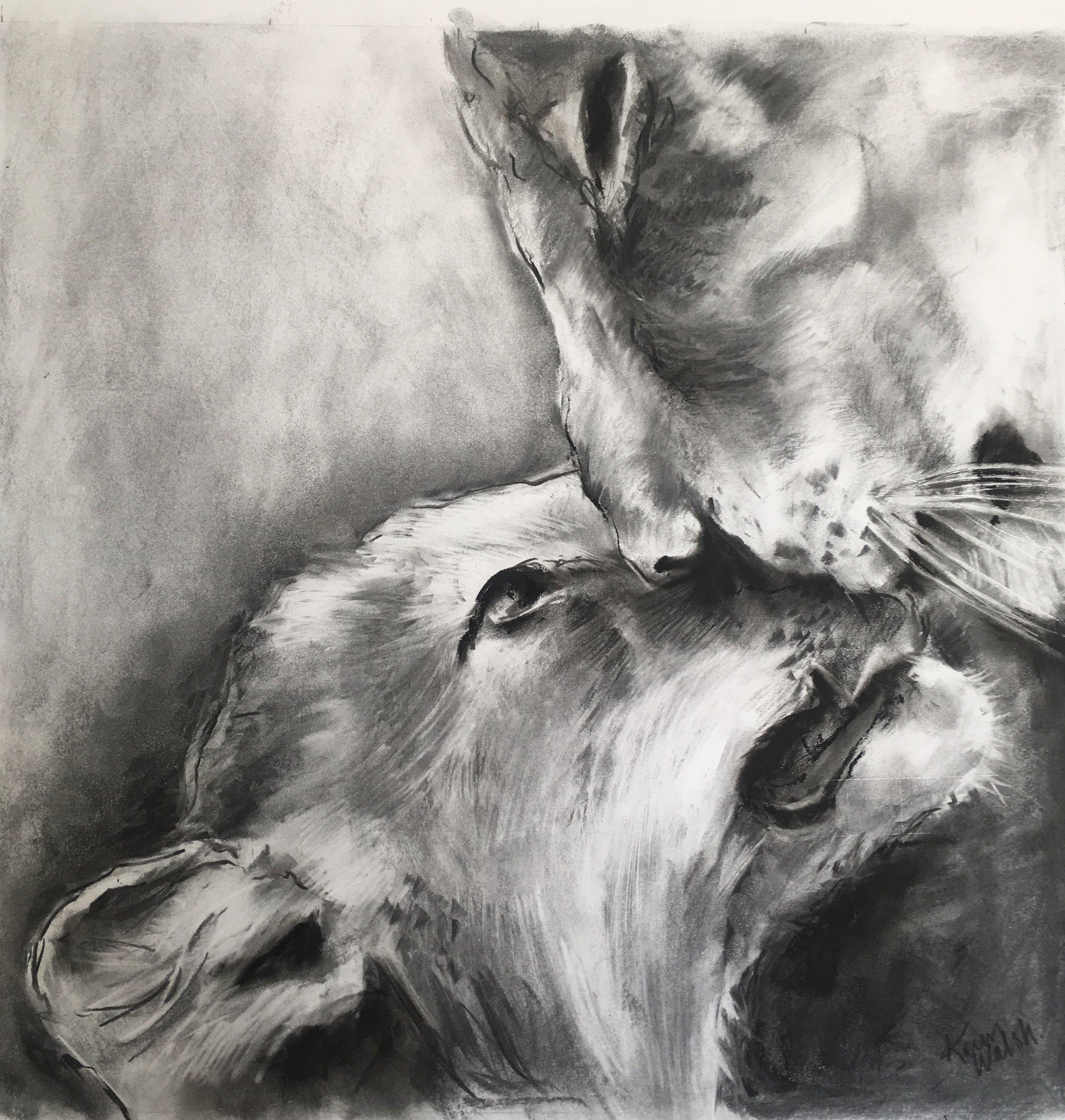 Affection, charcoal by Karen Walsh.jpg