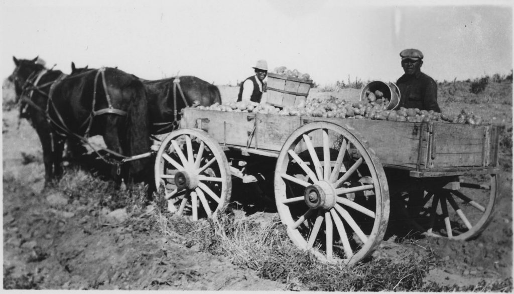 Wagon loads of potatoes would be pulled by horse to be loaded aboard the ships.