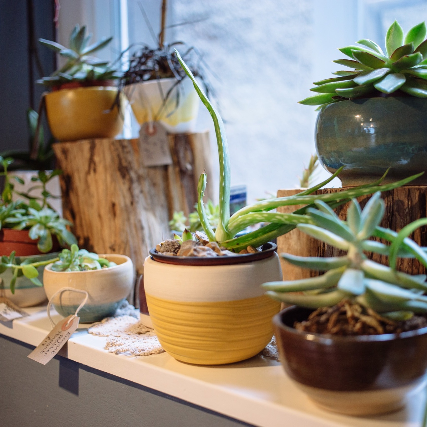 Join the great East Gate Gallery Plant Swap! Enjoy the benefits of houseplants and receive a free handmade stoneware pot when you've swapped five plants.