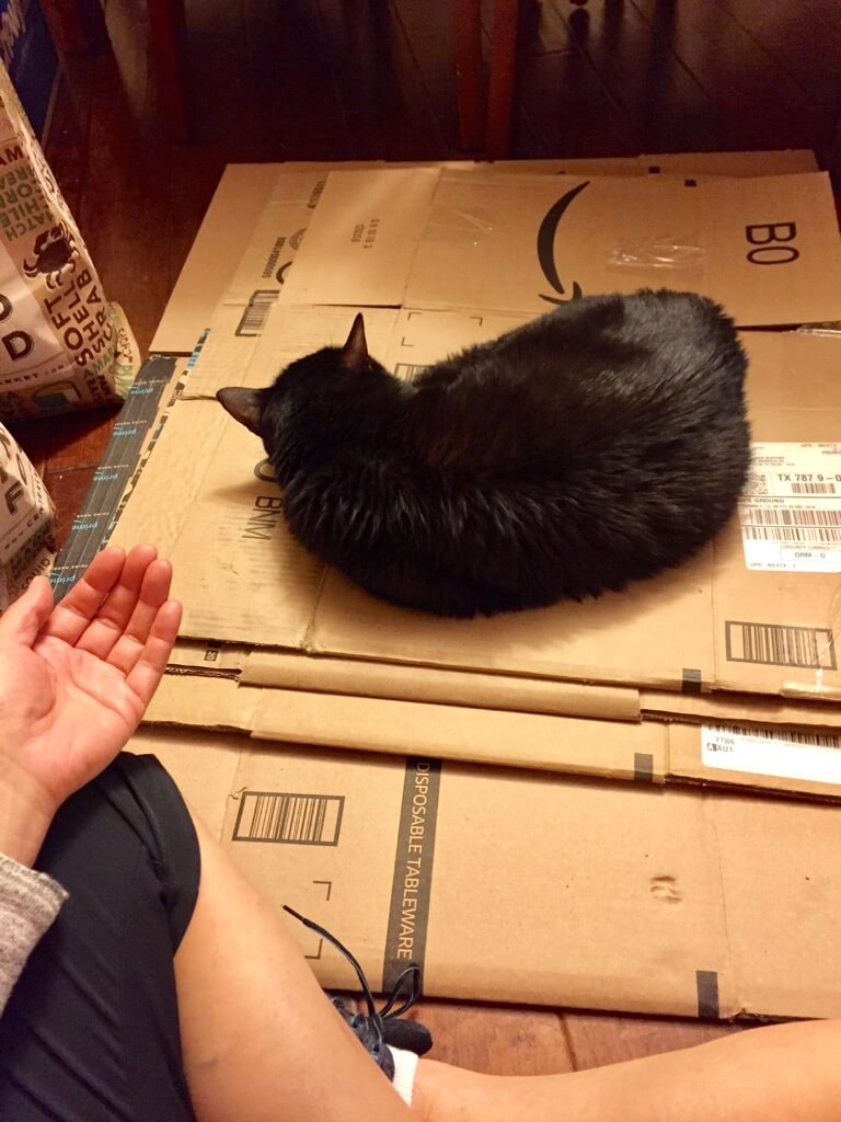 reiki without touching cat