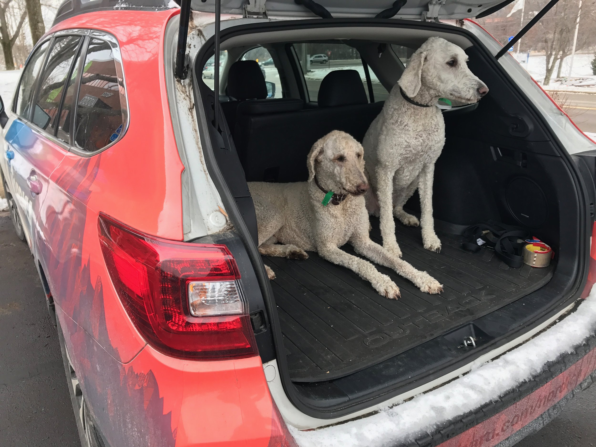 Subaru + Dogs.jpg