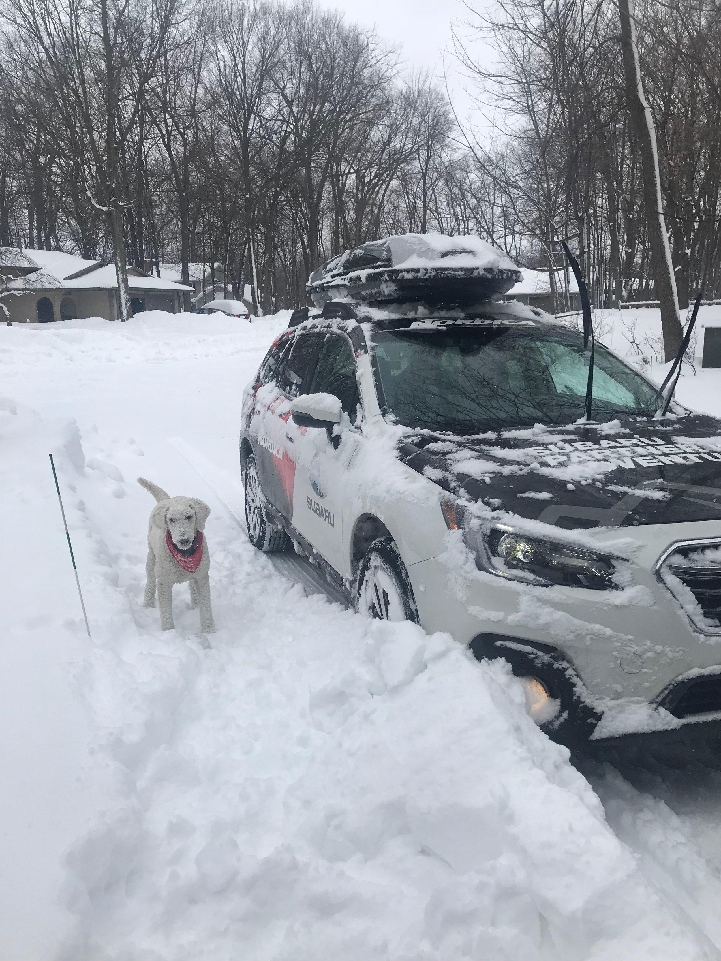 Subaru + Dog.jpg