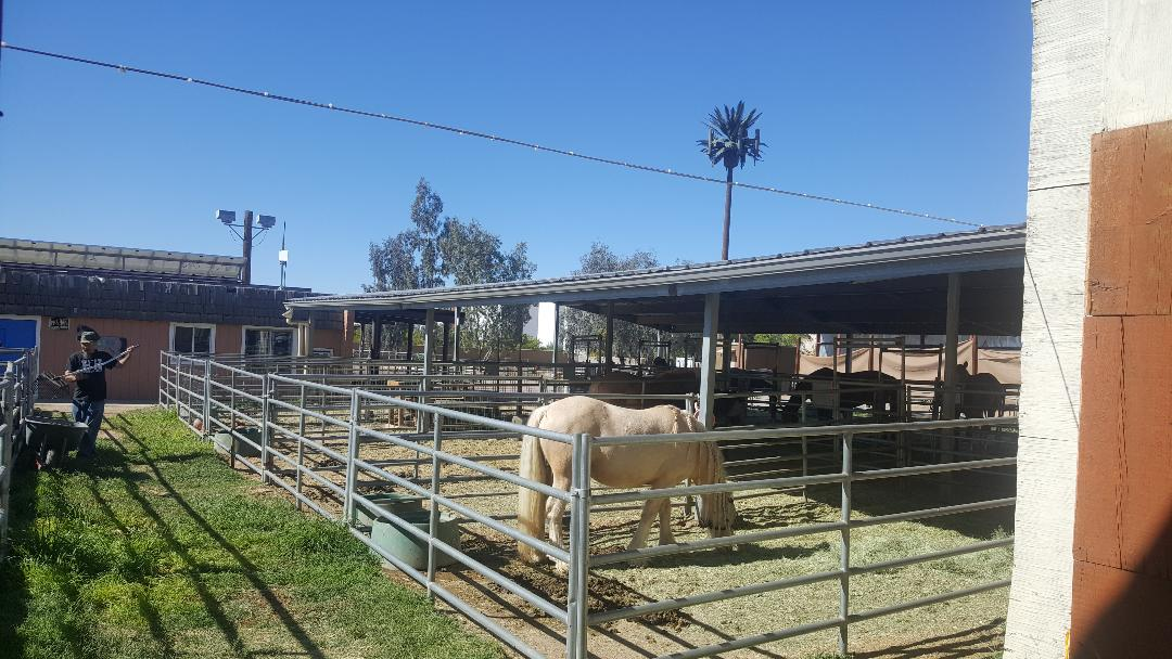 horses corrals.jpg