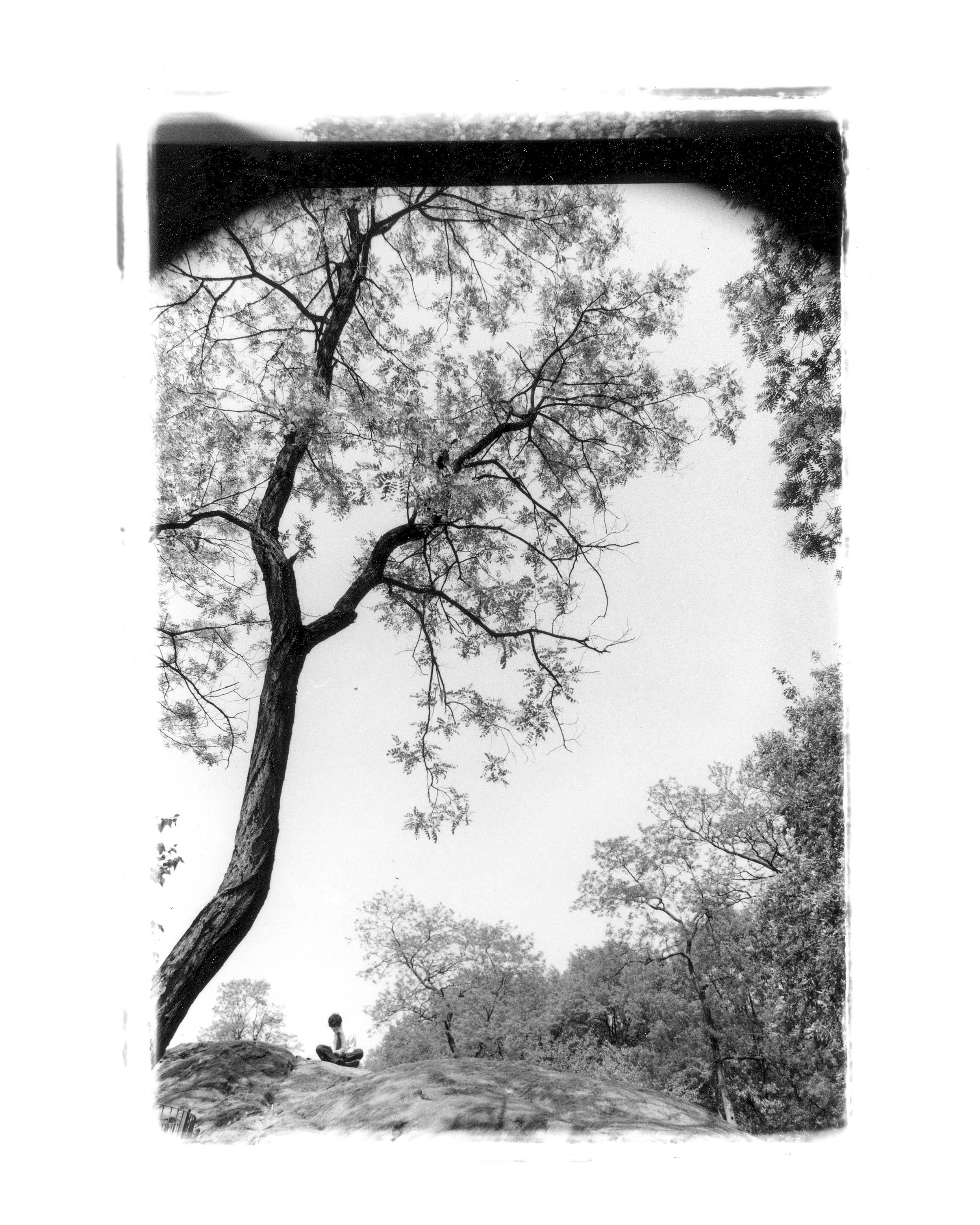 shane_deruise_alleyways_man_under_tree.jpg