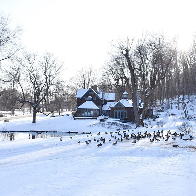 Until next year-beautiful snowy winters on the farm . . .  #stonoverfarm #barnwedding #berkshirewedding #berkshire #lenox #weepingwillow #bedandbreakfast #duckpond #luxurybedandbreakfast #ducks