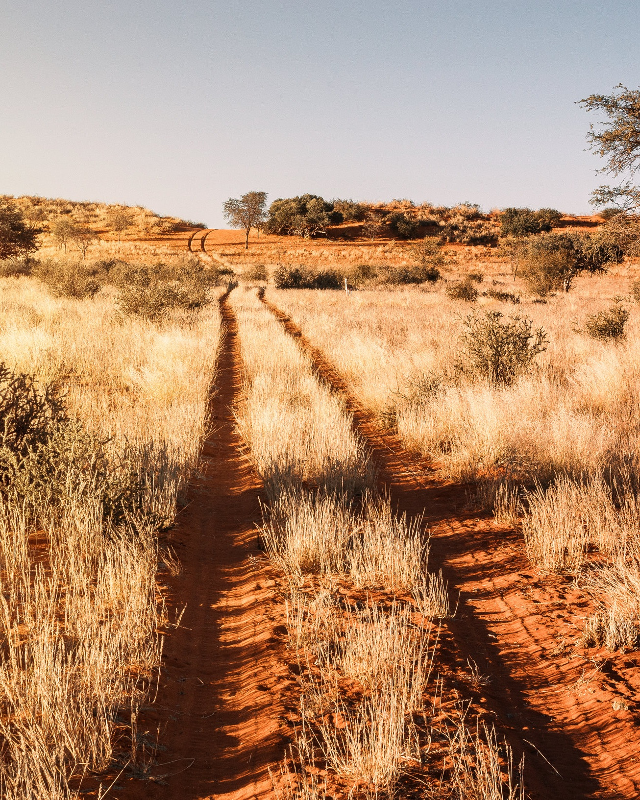 Kalahari+Globe+%2B+Tribe