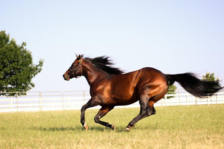 corona cartel barrel horses